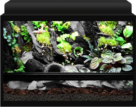10 Gallon Vivarium | www.pixshark.com - Images Galleries ... 10 Gallon Vivarium