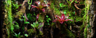 Vivarium Custom Background Kits