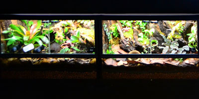 Aquarium Based Vivariums