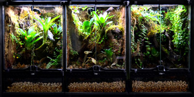 Vertical Aquarium Based Vivariums