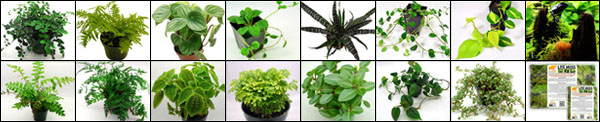 NEHERP Vivarium Plant Packs